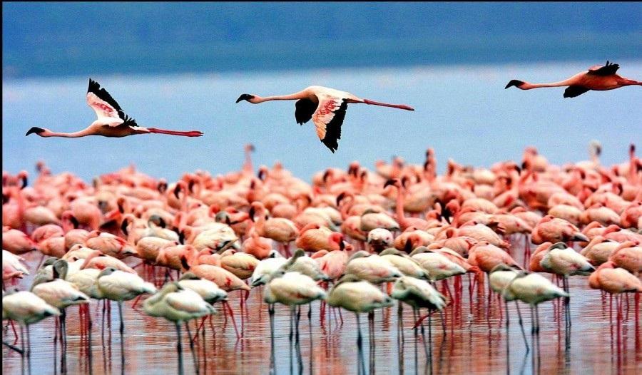 Lake Nakuru National Park Safaris