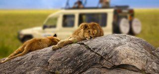 8 days Tarangire, Manyara and Serengeti trip