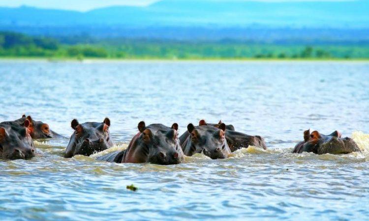 Attractions in Lake Manyara National Park