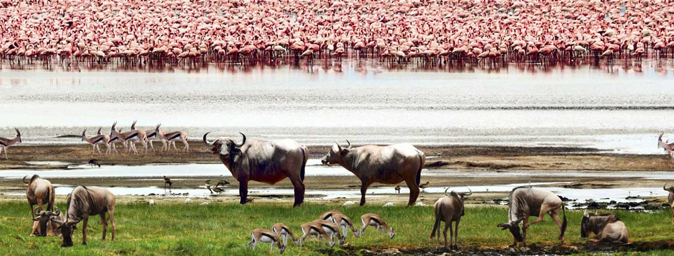 Best time to go to Lake Manyara National Park