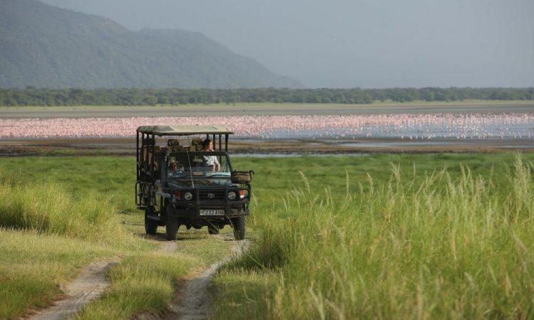 Game drives in Lake Manyara national park