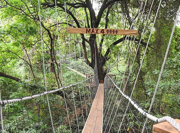 Treetop Walkway in Lake Manyara National Park