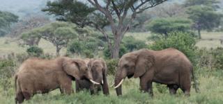 Wildlife in Lake Manyara National Park