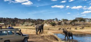 Wildlife viewing in Lake Manyara national park