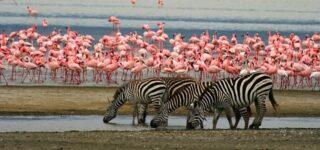 https://www.lakemanyaranationalparks.com/category/safaris/