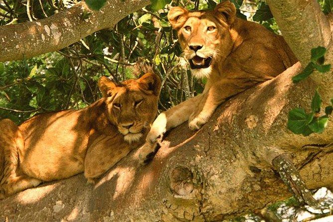 4 days Bwindi Gorilla Trekking and Queen Elizabeth Wildlife Safari