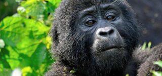 5 Days Uganda Rwanda Primates safari