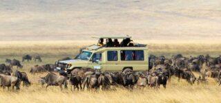 4 Days Serengeti & Lake Manyara Wildlife safari