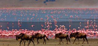 5 Days Tanzania Wildlife safari(Lake Manyara & Tarangire)