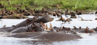 Lake Manyara National Park Wildlife