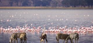 3 Days Lake Manyara & Arusha Wildlife Safari