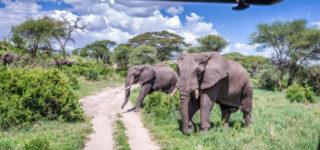 6 Days Ngorongoro & Serengeti Wildlife Safari