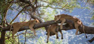 3 Days Ngorongoro & Tarangire Wildlife Safari