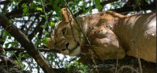 Budget safari in Lake Manyara National Park