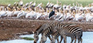 Lake Manyara National Park safari experience