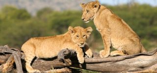 Tourist Attractions in Arusha National Park