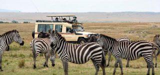 A safari in Tanzania during COVID 19