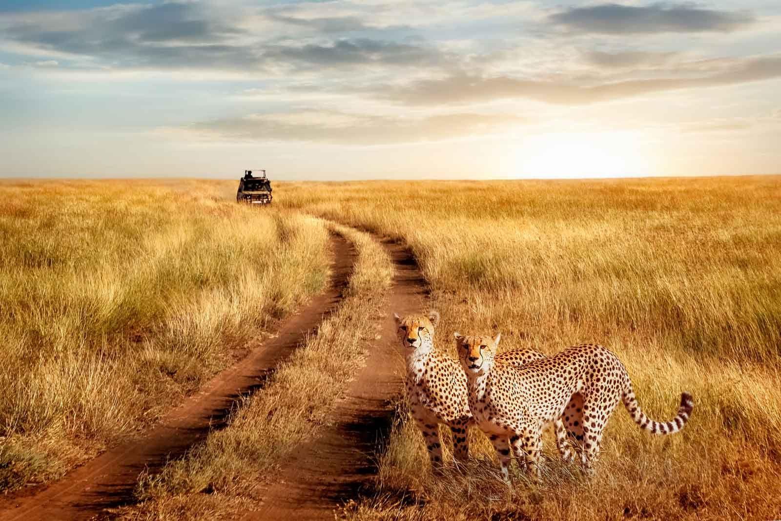 Serenegti National Park
