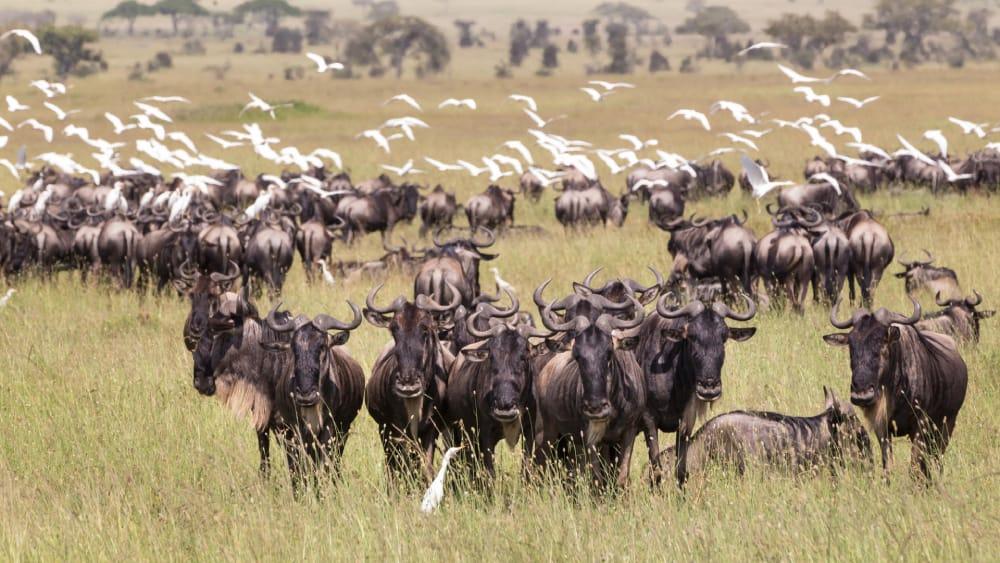 8 days Tanzania wildlife safari